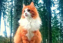 Il Mondo dei felini- Le nostre passioni / Gli amici migliori del mondo