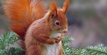 Ecureuils Photos
