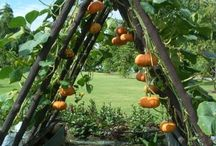 Gardening | Backyard Design / Plans for my future backyard garden. / by Cecilia Castaneda-Williams