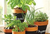 Naturally healthy home hints & ideas.