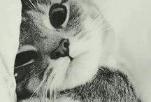 -CAT-