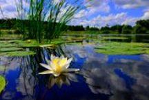 Ponds & Water Gardens in Spring/Summer