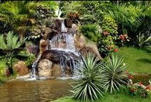 Planning a Water Garden / Planning Water Gardens and Fish Ponds