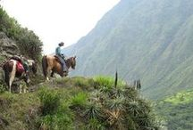 Horse Riding / There's no more enjoyable and efficient way to explore and experience the Ecuadorian Andes than on a sturdy horseback. Take some packed lunches and enjoy! See our Happygringo.com/SierraTour