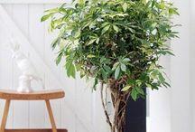 ♡ Indoor plants