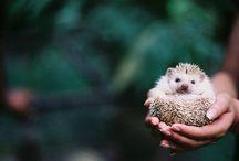 Animals - makes life worth living