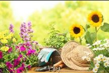 Dům a bydlení - zahrada / rostliny