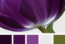 Barvy / Vzorníky