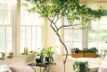 Flower Decor - Inside | Outside