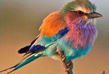 Birds / Tui's are me