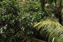 Bali, Budi 'n' my babes / What I saw and snapped.