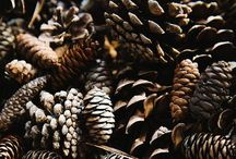 Plants / Flowers, seeds, pods, trunks, branches, leaves, ...