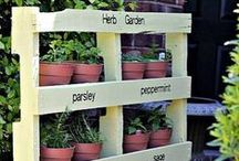 Garden ideas for renting - small spaces