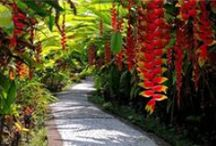 Tropical Gardens and variegated plants for colour -  Love