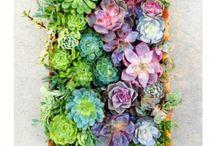 Kukkiaaa