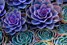 The Succulent Garden / Succulents, succulents and more succulents!!