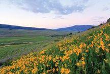 Market Updates for Crested Butte