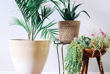 Pure nature / #Nature #Greenery, #plantes, vegetation, green #plants, botanic, vegetal, tropical, palm tree, #fleurs #flowers