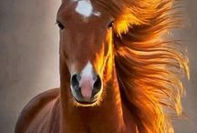 Noble horses