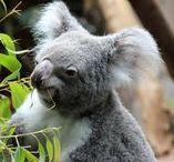 Zoo Testberichte / Hier werden Pins zu Tierpark- und Zoobesuchen gesammelt.