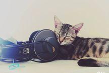 Cats / Niarrr