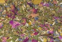 Sleep Naked Tea - deconstructed / Sleep Naked is a simple but luxurious blend of flowers and leaves that helps you slow down, and gently soothes your body and mind. So silky and simple, it makes even the grumpiest insomniac wanna Sleep Naked.  100% Organic.  Caffeine Free. Sleep Naked is available from www.TheTeaAlchemist.com
