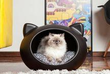 Kitty, kitty... / Beautiful felines