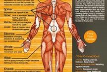 Information on the Body