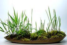 Kusamono / Shitakusa / Kokedama / Bonsai / - kusa=grass and mono=thing - shita = below or under, and kusa = grass - koke=moss and dama=ball Nearai, which literally means Ne=Root, arai=washed
