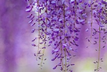 "Violet, Lilac & Lavender Joy / by Sandra Russ Perry ""Vintage Enjoyables"""