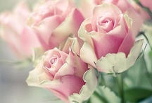 """La Vie En Rose / In French, """"life in rosy hues,"""" has always brought roses to mind for me. The beauty, scent, and inspiration are extraordinary... Enjoy!   / by Sandra Russ Perry """"Vintage Enjoyables"""""""