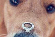 Pet Friendly Engagement