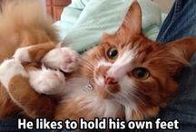 Pet Loves <3 / Innocent, cute - pet