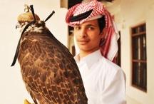 Qatar | Falconry