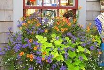 Window Boxes / by Bobbi Cooper