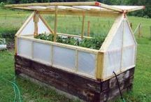 Homesteading / by Kat Trubey