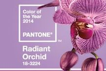 RADIANT ORCHID COULEUR 2014