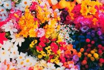 Flora / by Angela Oudshoorn