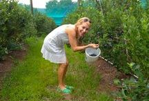 In The Garden / Happiness is being in the garden!  I'm happiest, when I can pick my own!