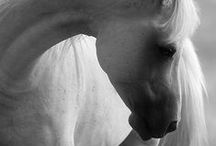 The B&W Horse