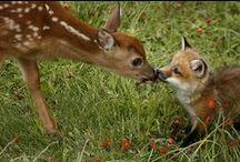 Ζώα / Lovly face