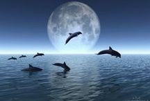 Φεγγάρια