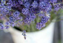 Gardening & Yard Ideas