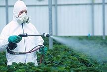 Organic...NO GMO! / by Ginny Cannon