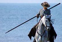 { chevaux / horses }