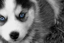 { chiens / dog }