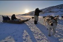 Dogs and Dog Sledding / The inuit people, now living in both Greenland, Canada and Alaska, invented the dog sled.