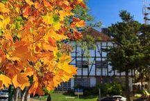 OUTONO/AUTOMNE/FALL / sobre as delícias do outono