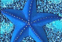 Coralli, Stelle marine e Piccolo Mare