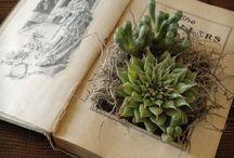 Plants, flowers, garden